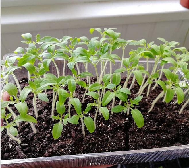 Аллерголог назвал аллергенные комнатные растения