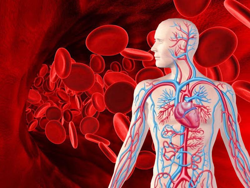 Нехватка гемоглобина: как ее распознать и чем она чревата