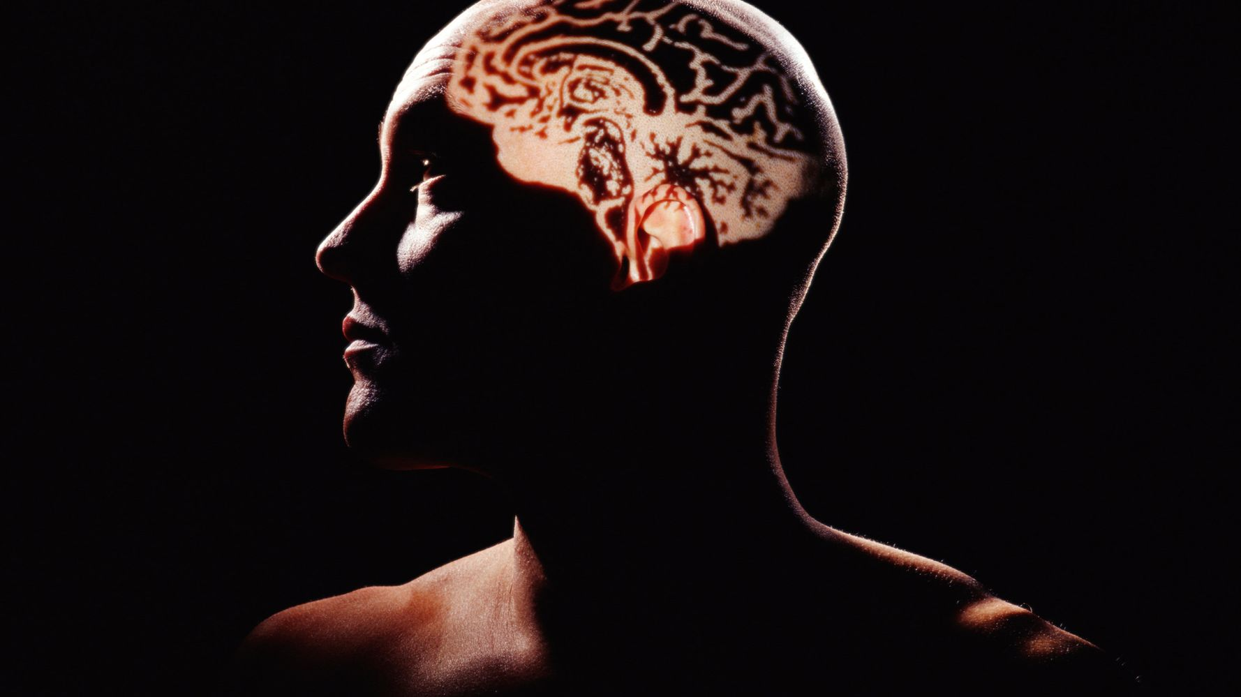 Женский и мужской мозг: различия