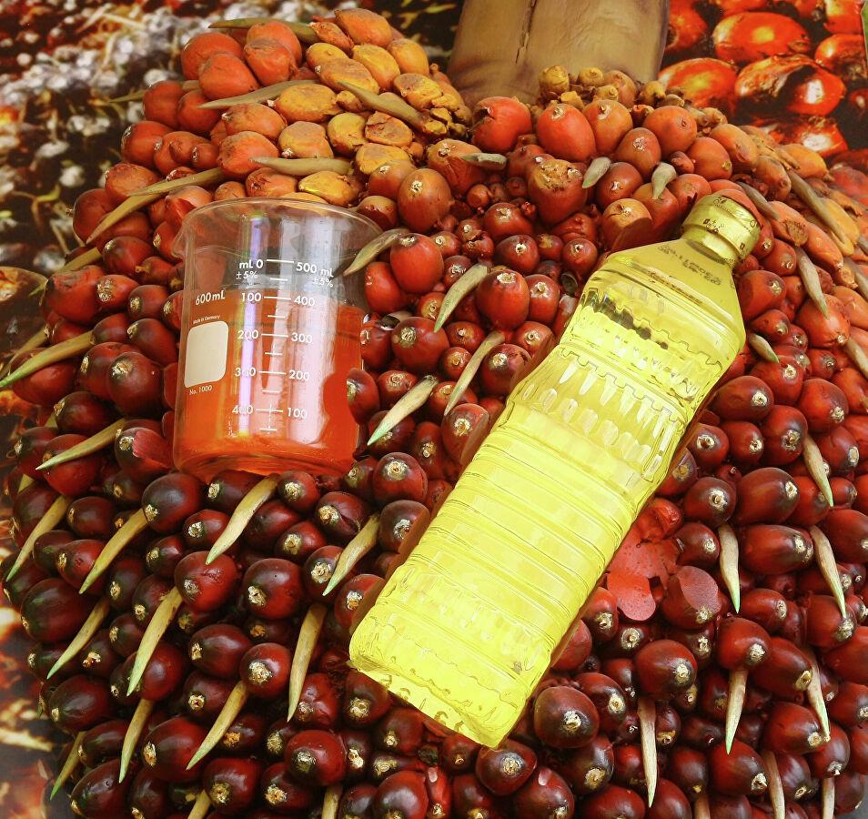 Раскрыты полезные свойства пальмового масла